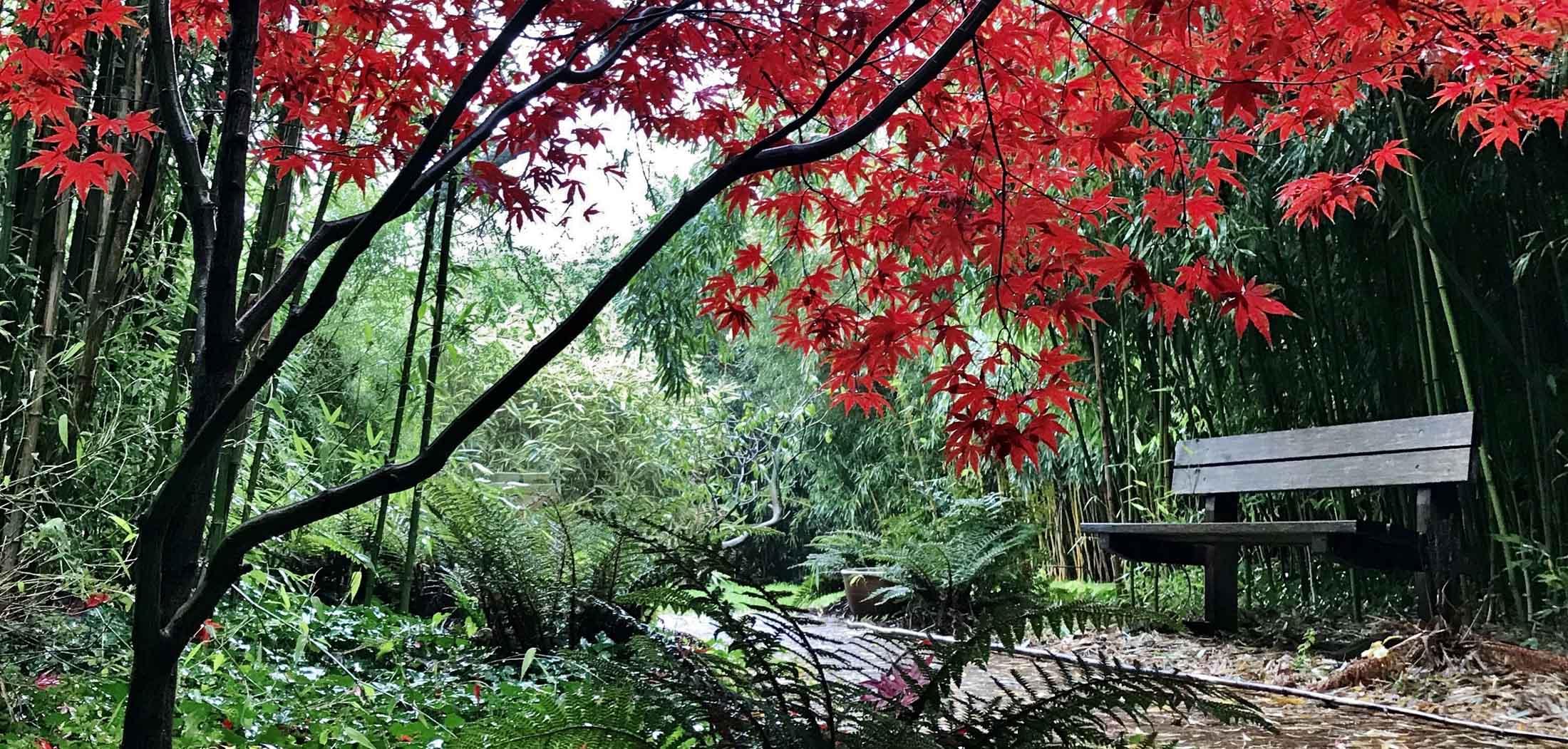 bamboepark-achterkant