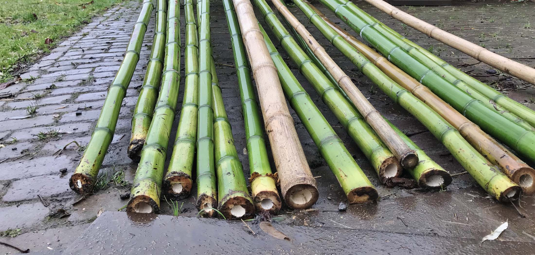 bamboepark-schellinkhout